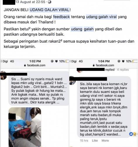 Udang galah viral